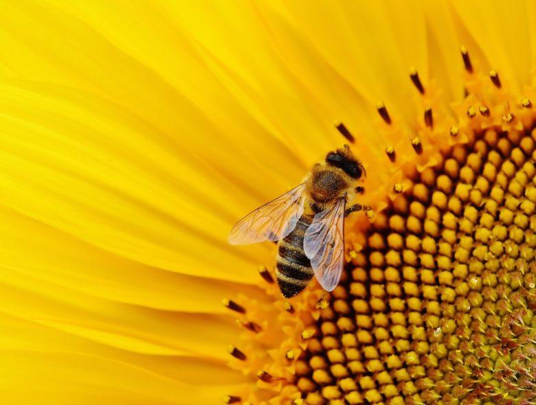 蜂のパワー